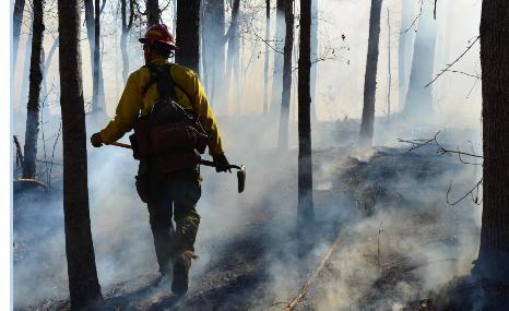Gordon County Wildfire Burns Close to 100 Acres, Schools