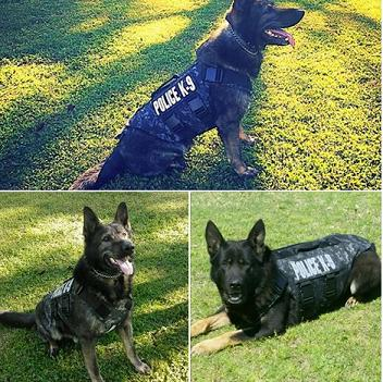 Local Police Dogs Receive Body Armor