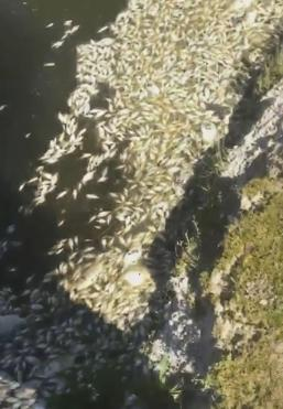 Hundreds of Dead Fish Found at Lake in Cartersville