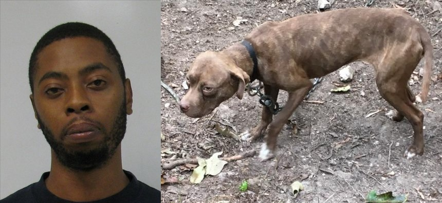 Polk County Man Gets 15 Years in Prison for Dog Fighting