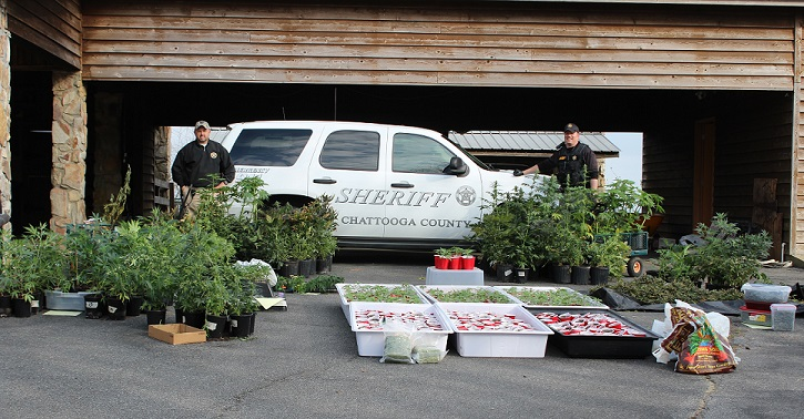 Drug Bust Nets 1028 Suspected Marijuana Plants