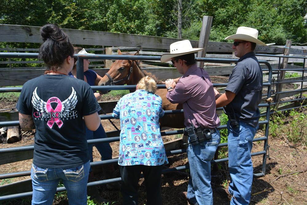 Horses Seized in Animal Cruelty Investigation