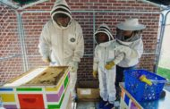 West End Elementary Students Continue Care for Bee Hives
