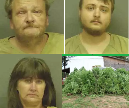 State Task Force, Sheriff's Deputies Discover 90+ Marijuana Plants, 3 Arrested