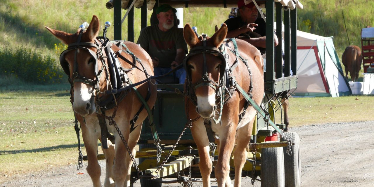 John Wisdom Wagon Train and Billy Puryear Ride – Final Year Ends with Parade on Broad Street This Saturday
